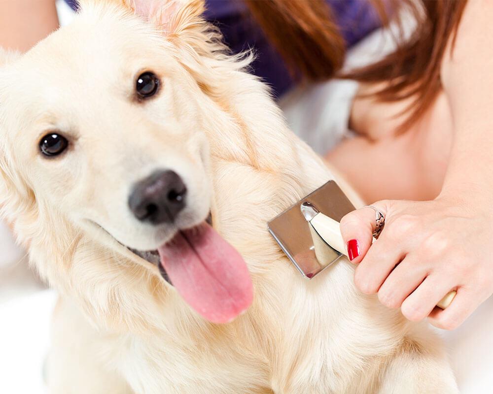 How to Combat Pet Hair